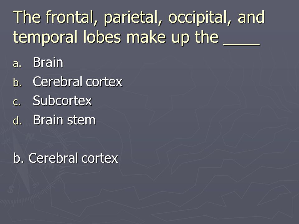 The frontal, parietal, occipital, and temporal lobes make up the ____