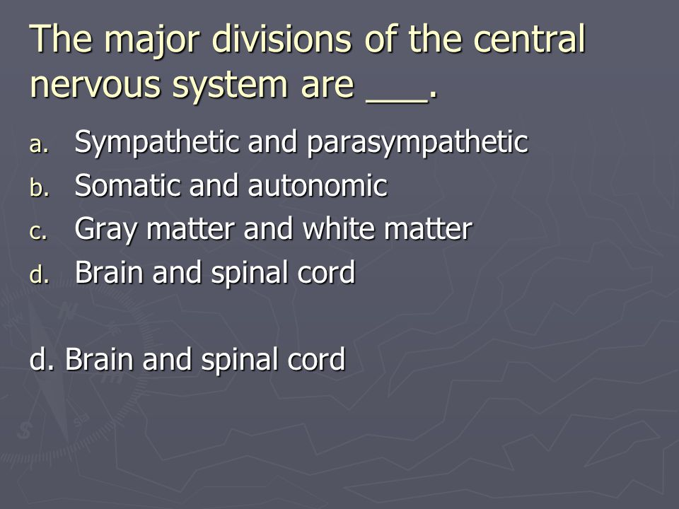 The major divisions of the central nervous system are ___.