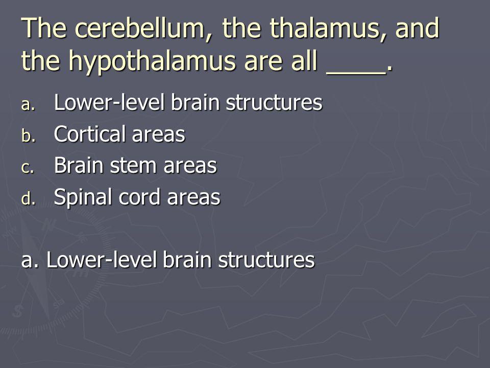 The cerebellum, the thalamus, and the hypothalamus are all ____.
