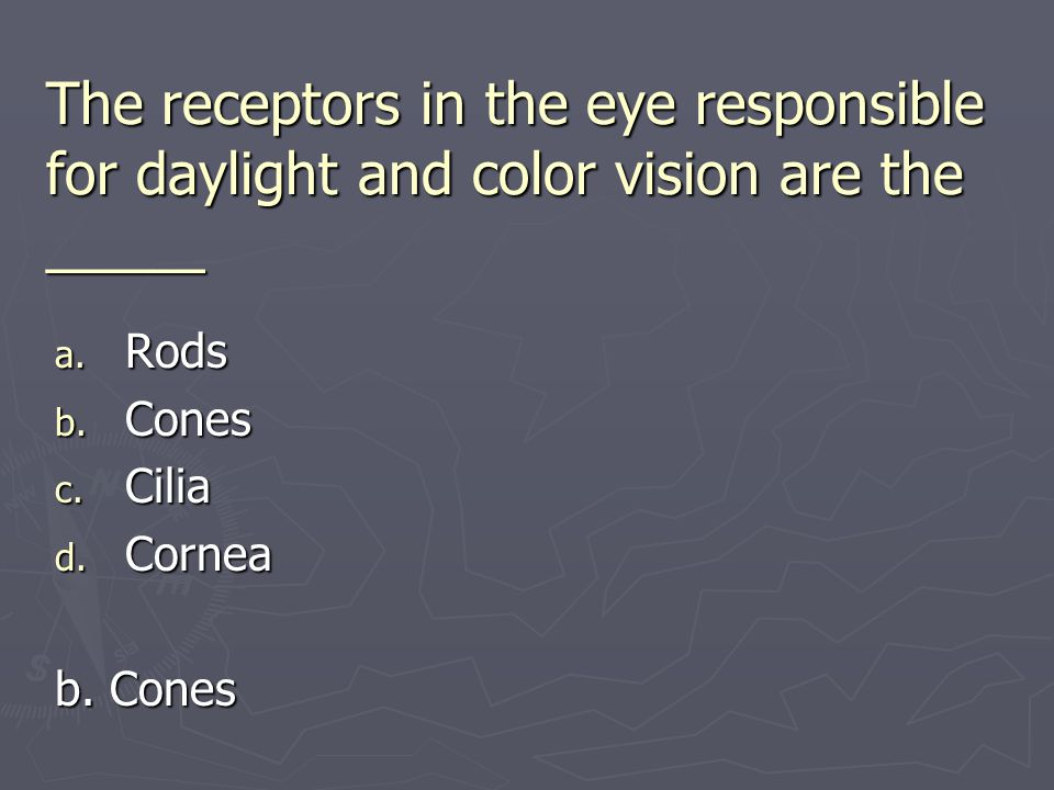 The receptors in the eye responsible for daylight and color vision are the _____