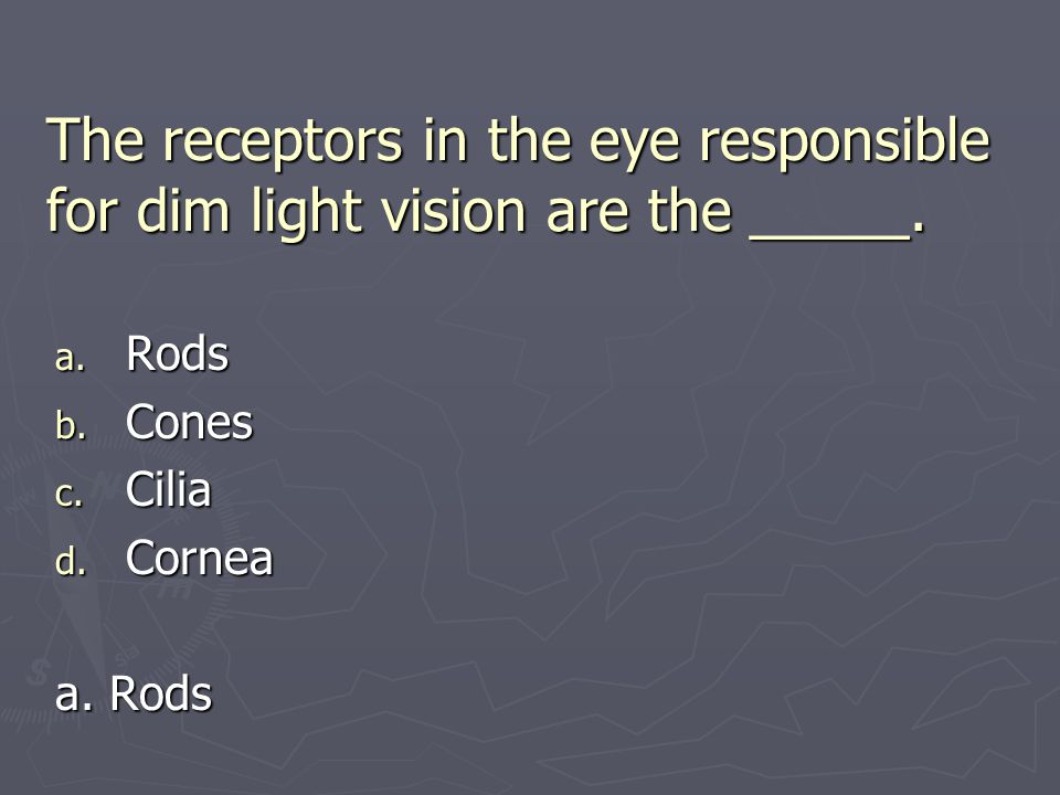 The receptors in the eye responsible for dim light vision are the _____.