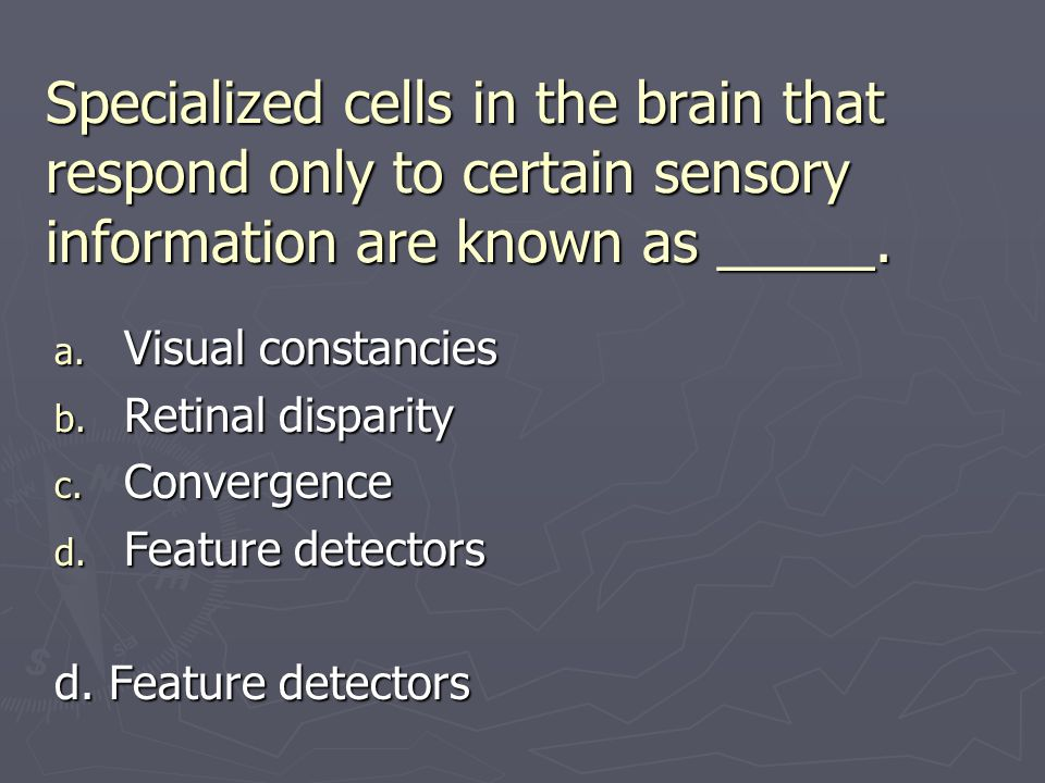 Specialized cells in the brain that respond only to certain sensory information are known as _____.