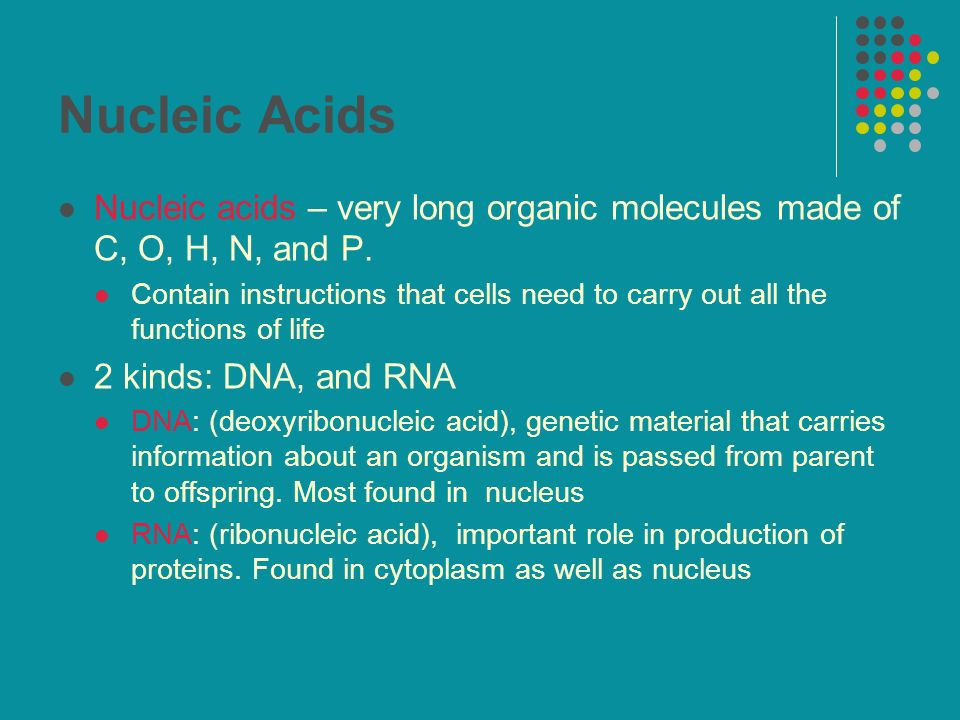 Nucleic Acids Nucleic acids – very long organic molecules made of C, O, H, N, and P.