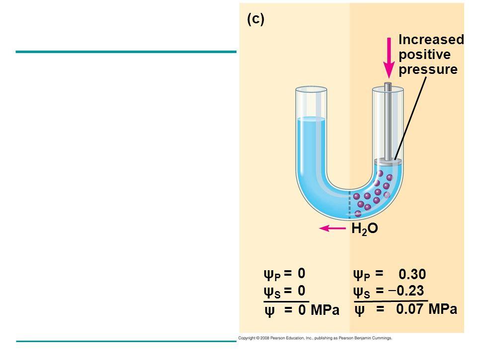 (c) H2O ψP = 0 ψS = 0 ψP = ψS = −0.23 ψ = 0 MPa ψ = 0.07 MPa