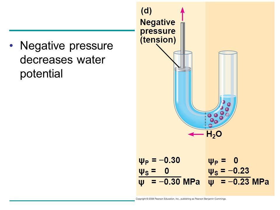 Negative pressure decreases water potential