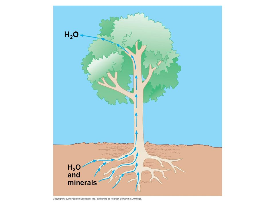 H2O H2O and minerals