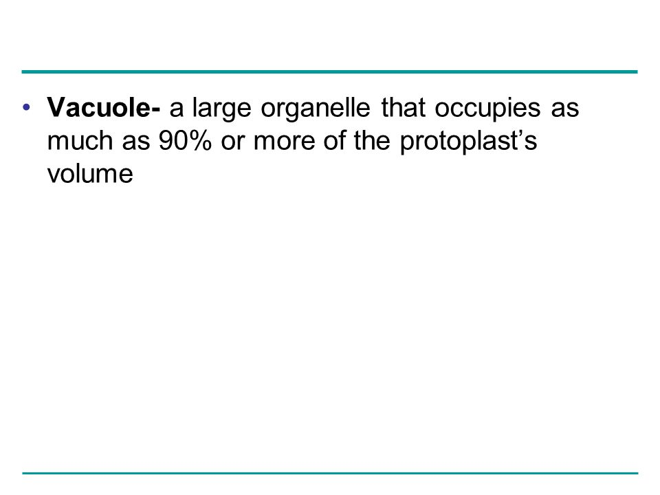Vacuole- a large organelle that occupies as much as 90% or more of the protoplast's volume