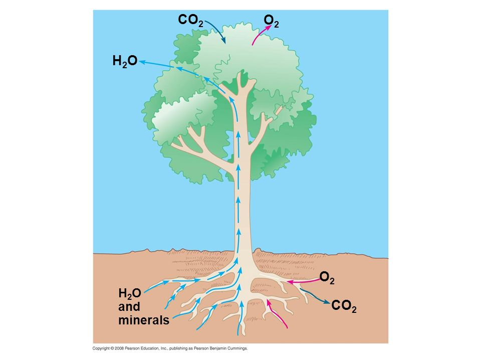 CO2 O2 H2O O2 H2O and minerals CO2
