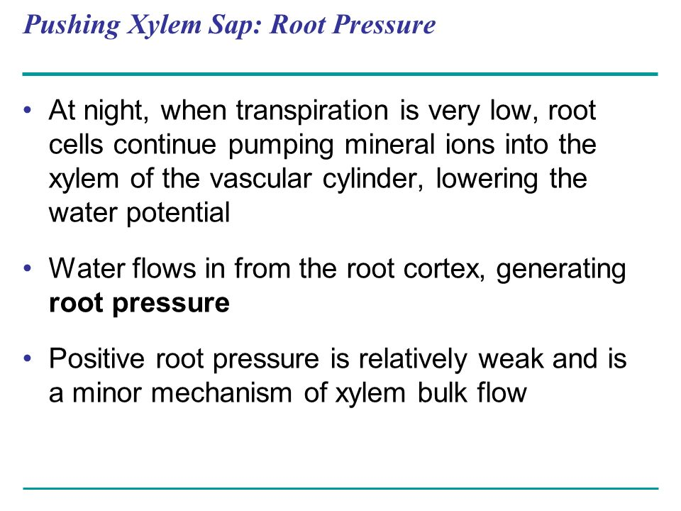 Pushing Xylem Sap: Root Pressure