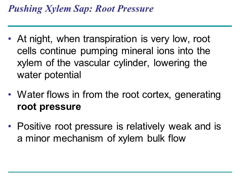 Pushing Xylem Sap: Root Pressure