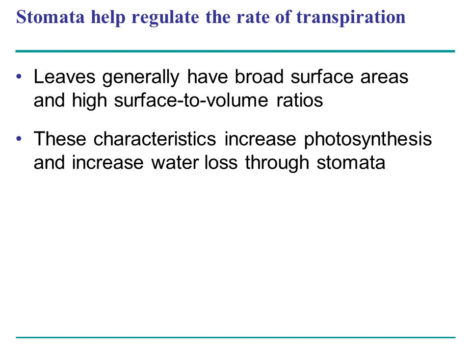 Stomata help regulate the rate of transpiration