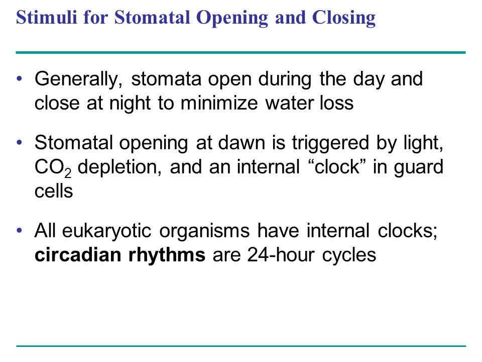 Stimuli for Stomatal Opening and Closing