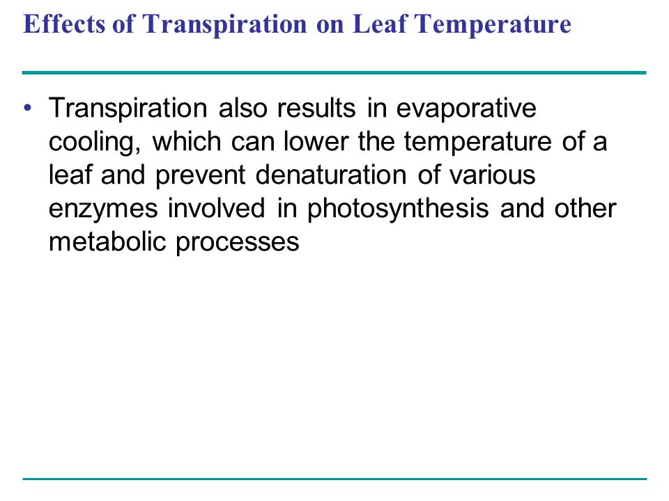 Effects of Transpiration on Leaf Temperature