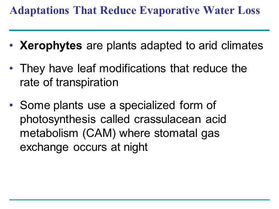 Adaptations That Reduce Evaporative Water Loss