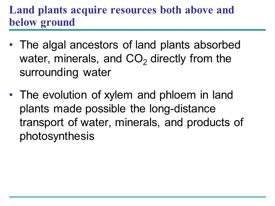 Land plants acquire resources both above and below ground