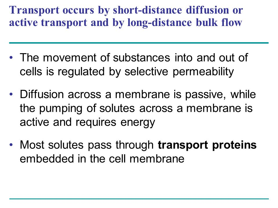 Transport occurs by short-distance diffusion or active transport and by long-distance bulk flow