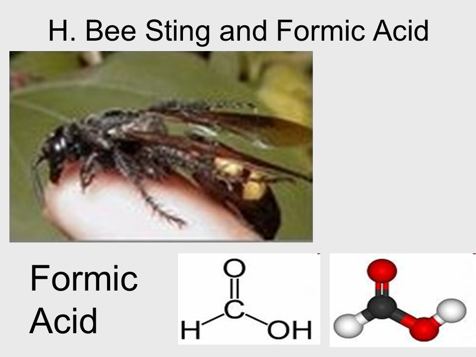 H. Bee Sting and Formic Acid