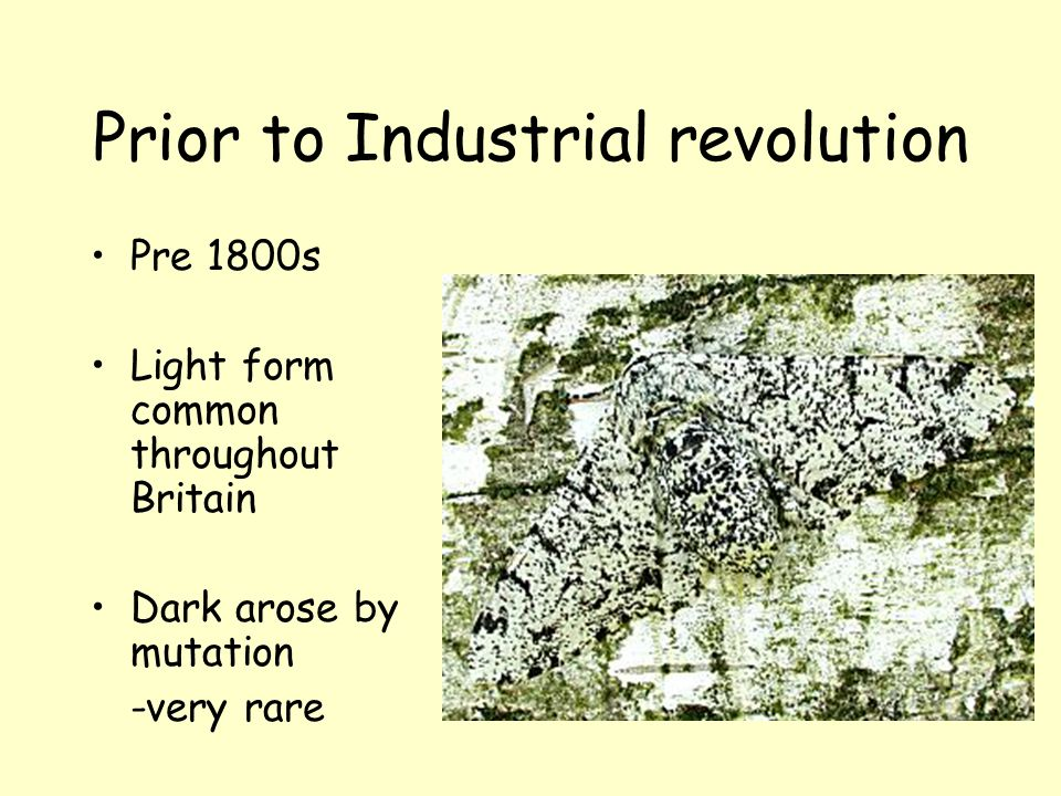 Prior to Industrial revolution