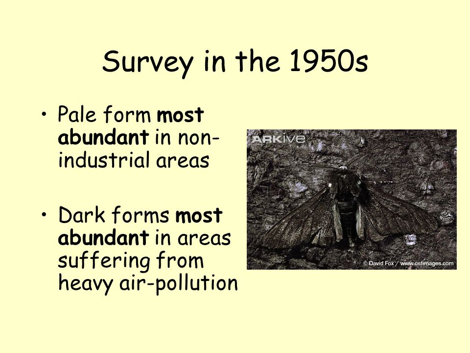 Survey in the 1950s Pale form most abundant in non-industrial areas