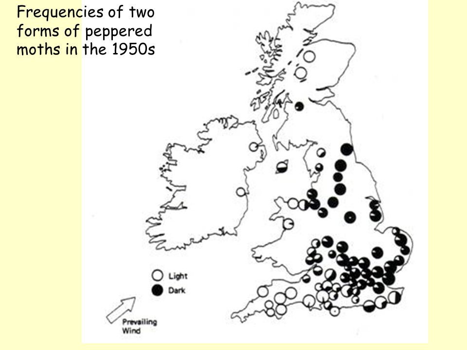 Frequencies of two forms of peppered moths in the 1950s