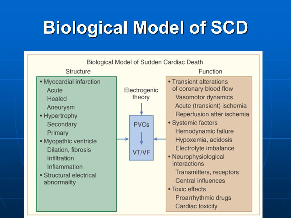 Biological Model of SCD
