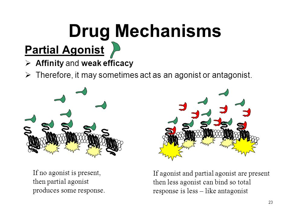 Drug Mechanisms Partial Agonist Affinity and weak efficacy