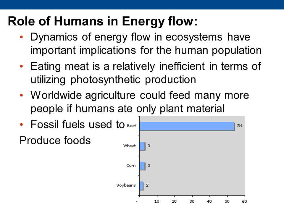 Role of Humans in Energy flow: