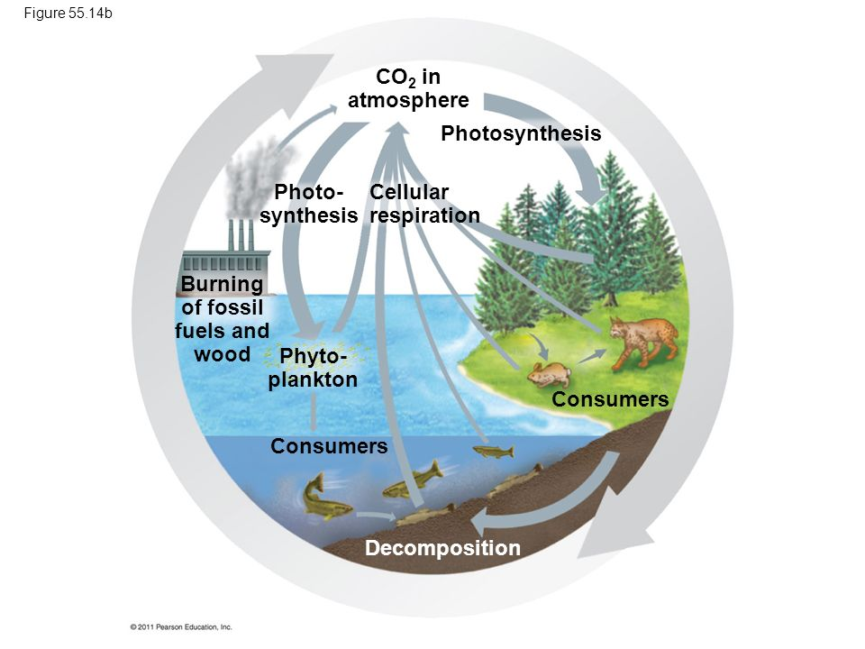 Burning of fossil fuels and wood