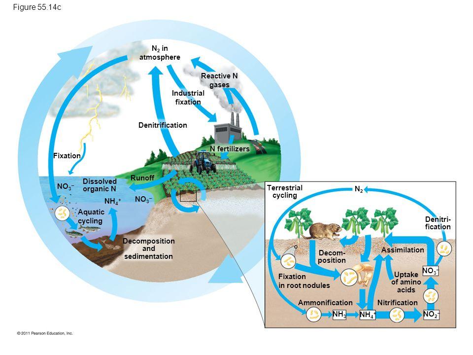 Decomposition and sedimentation