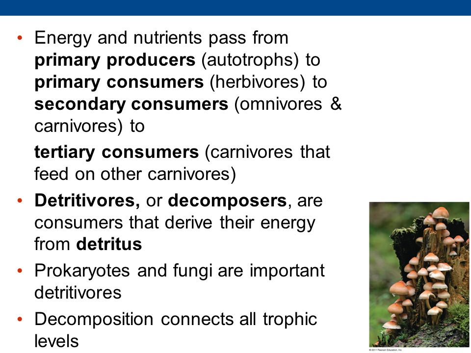 Energy and nutrients pass from primary producers (autotrophs) to primary consumers (herbivores) to secondary consumers (omnivores & carnivores) to