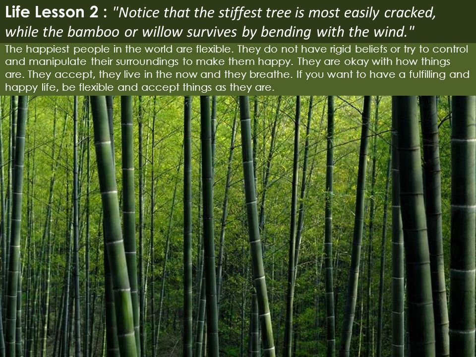 Life Lesson 2 : Notice that the stiffest tree is most easily cracked, while the bamboo or willow survives by bending with the wind.