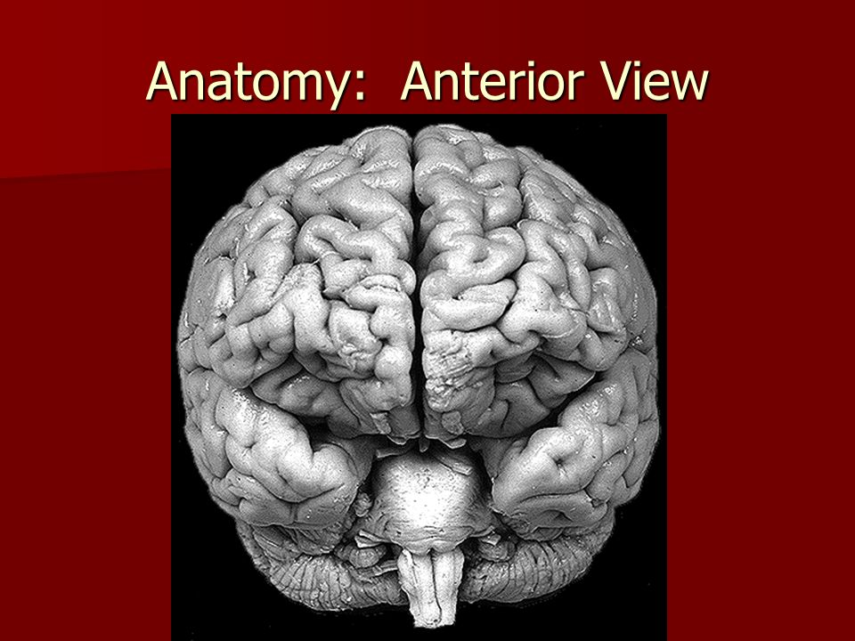Anatomy: Anterior View