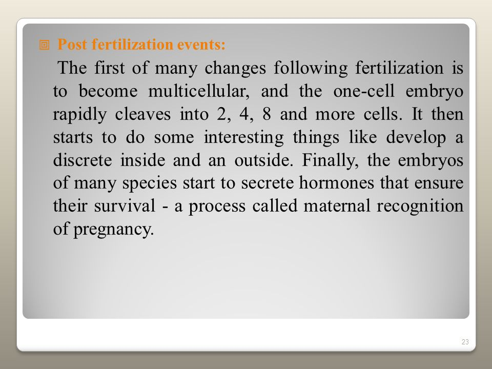 Post fertilization events: