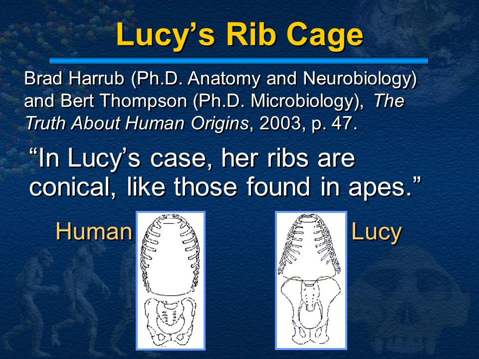 Lucy's Rib Cage Brad Harrub (Ph.D. Anatomy and Neurobiology) and Bert Thompson (Ph.D. Microbiology), The Truth About Human Origins, 2003, p. 47.