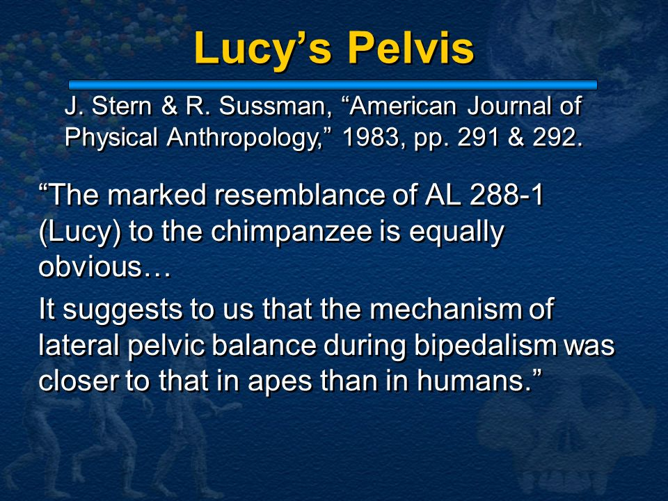 Lucy's Pelvis J. Stern & R. Sussman, American Journal of. Physical Anthropology, 1983, pp. 291 & 292.