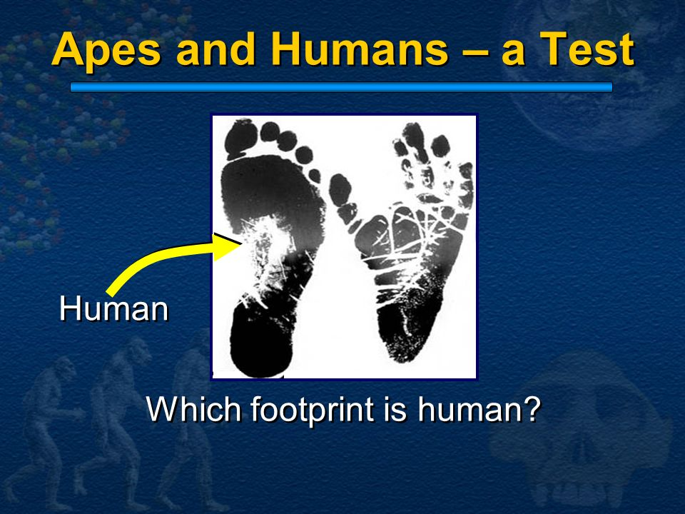 Which footprint is human