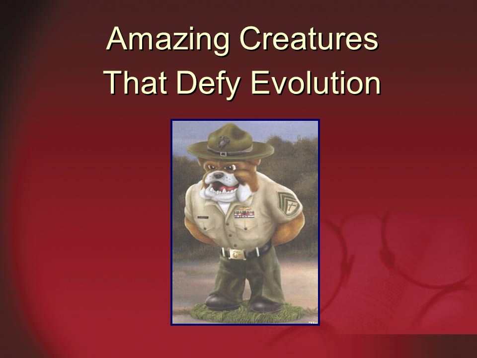 Amazing Creatures That Defy Evolution