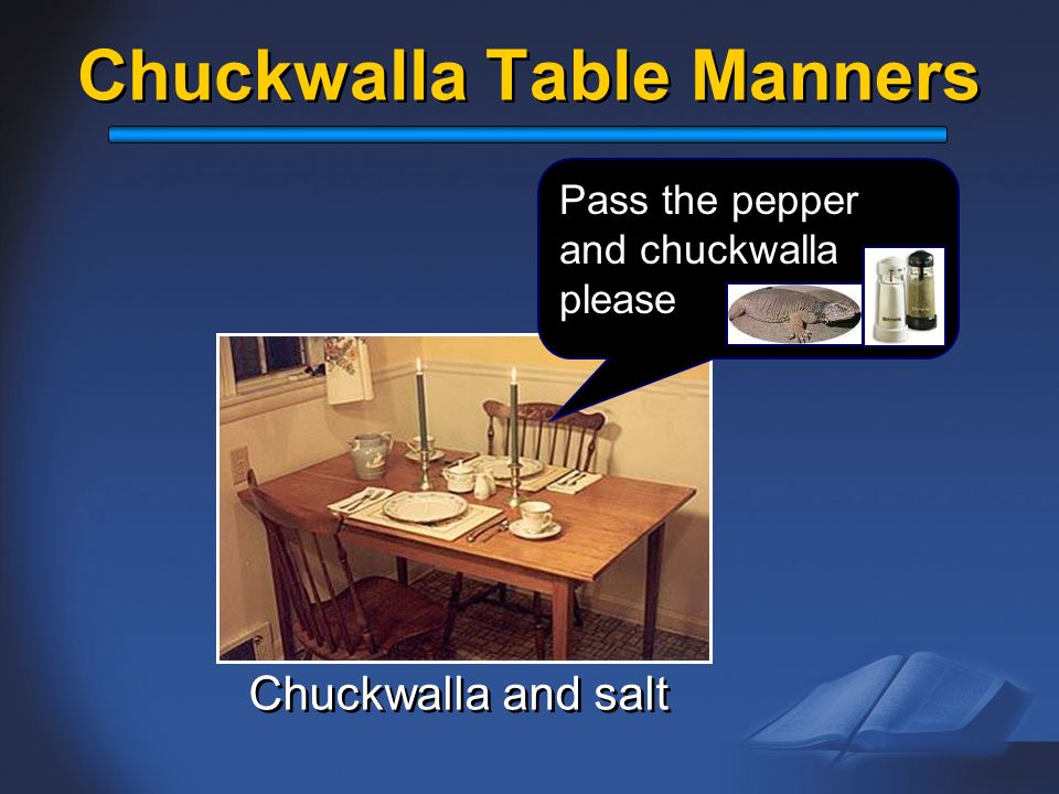 Chuckwalla Table Manners