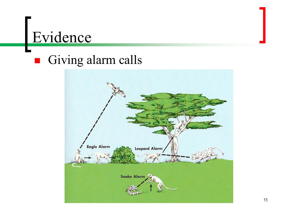 Evidence Giving alarm calls P. 32 (45 of pdf file)