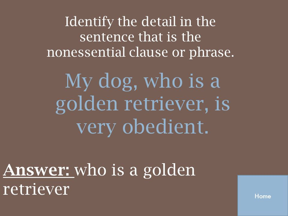 My dog, who is a golden retriever, is very obedient.