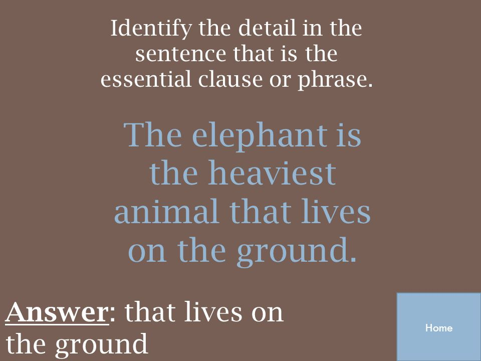 The elephant is the heaviest animal that lives on the ground.