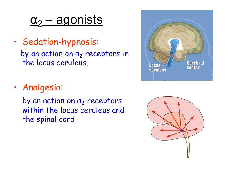 α2 – agonists Sedation-hypnosis: Analgesia: