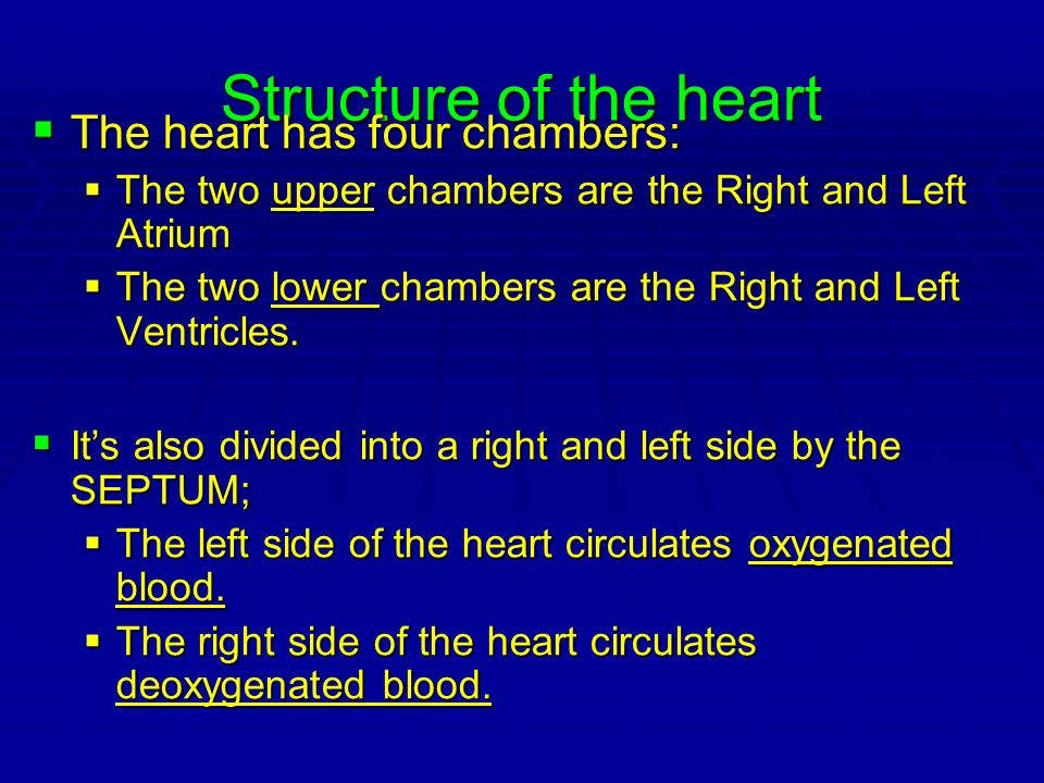 Structure of the heart The heart has four chambers: