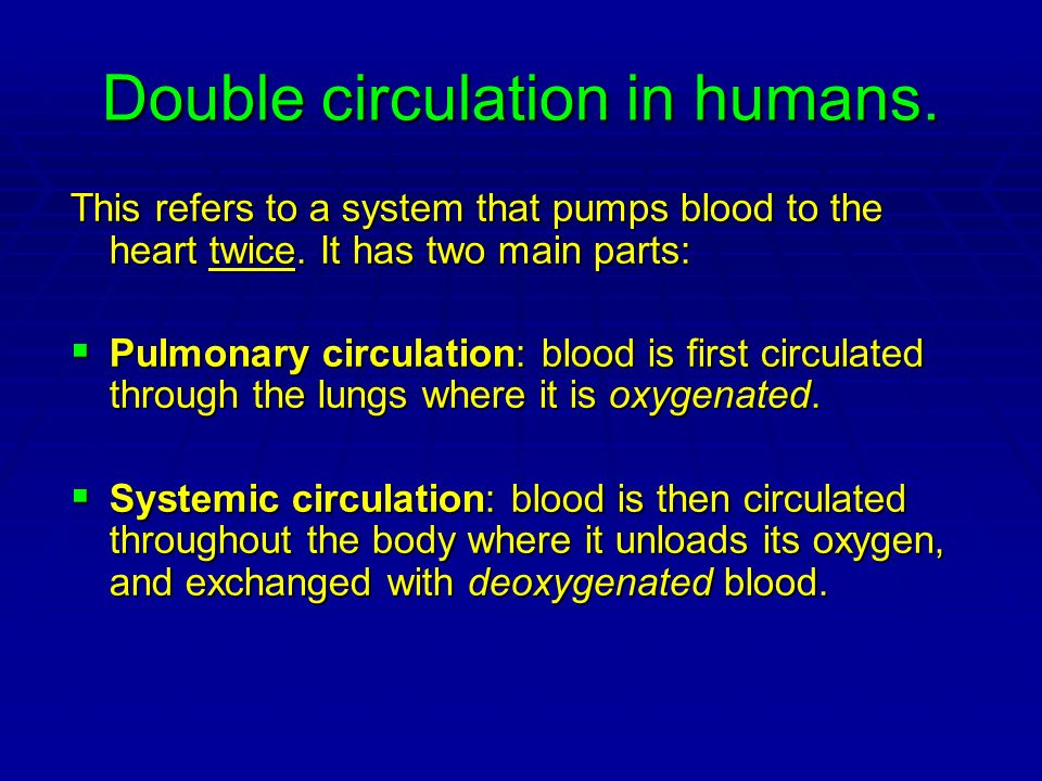 Double circulation in humans.