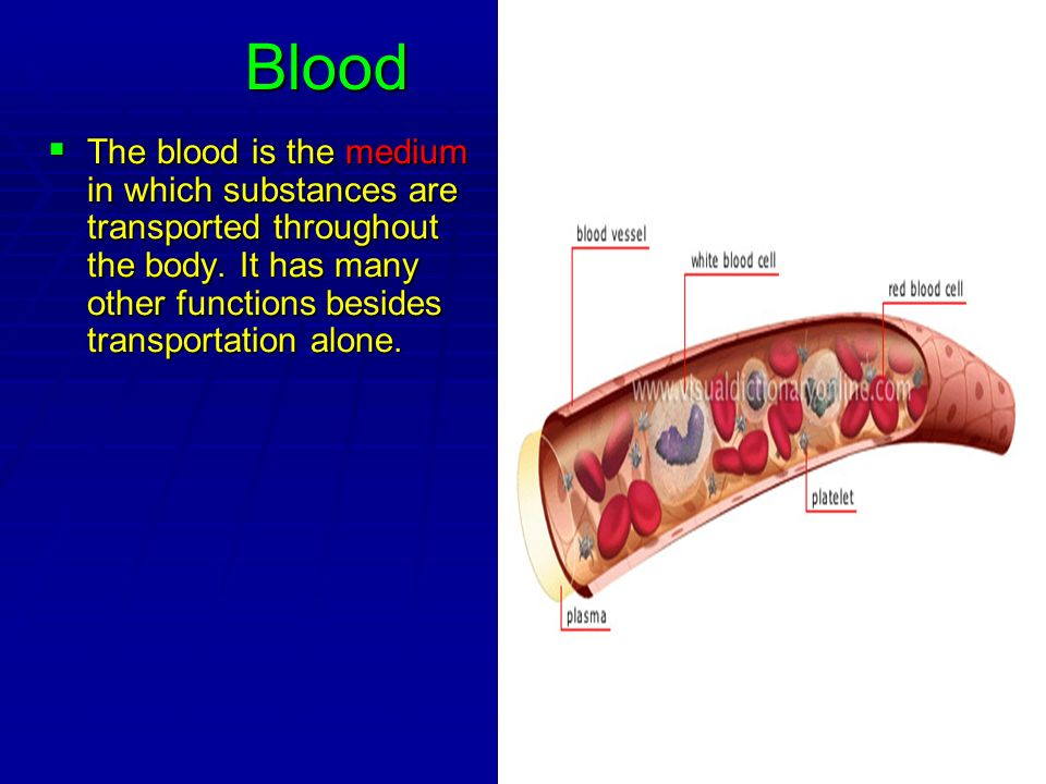 Blood The blood is the medium in which substances are transported throughout the body.