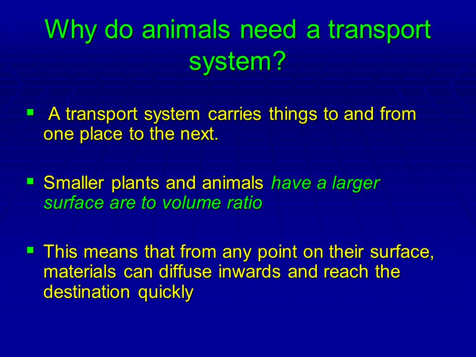 Why do animals need a transport system