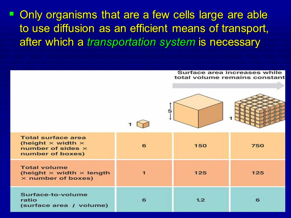 Only organisms that are a few cells large are able to use diffusion as an efficient means of transport, after which a transportation system is necessary