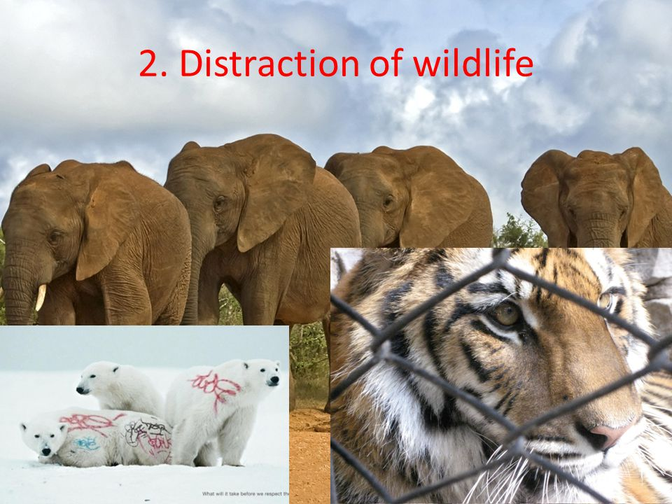 2. Distraction of wildlife