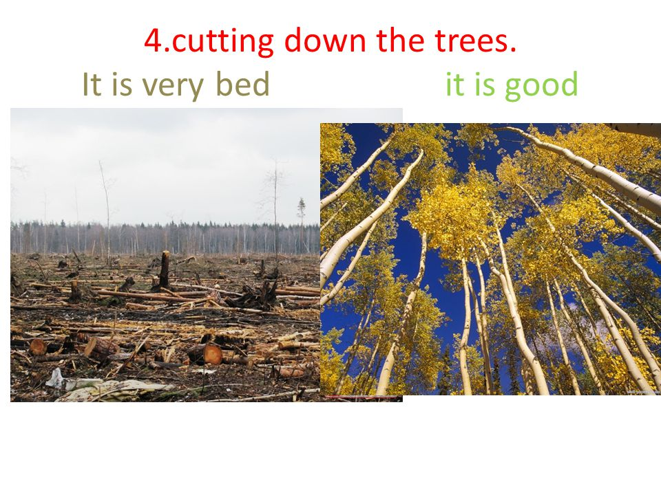 4.cutting down the trees. It is very bed it is good