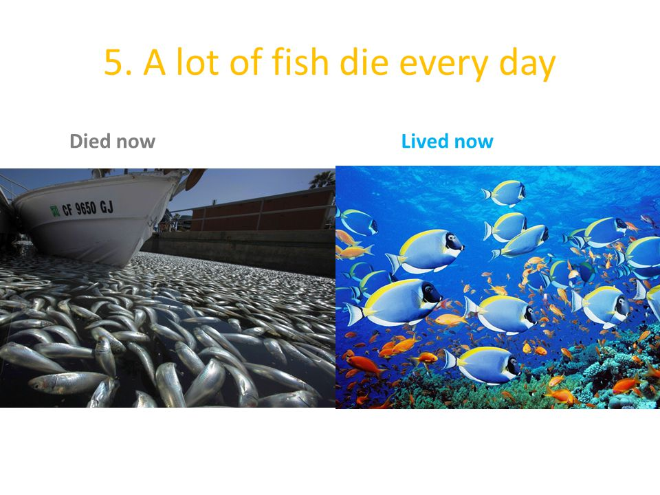 5. A lot of fish die every day
